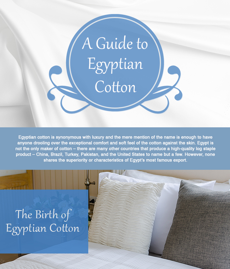 a guide egyption cotton